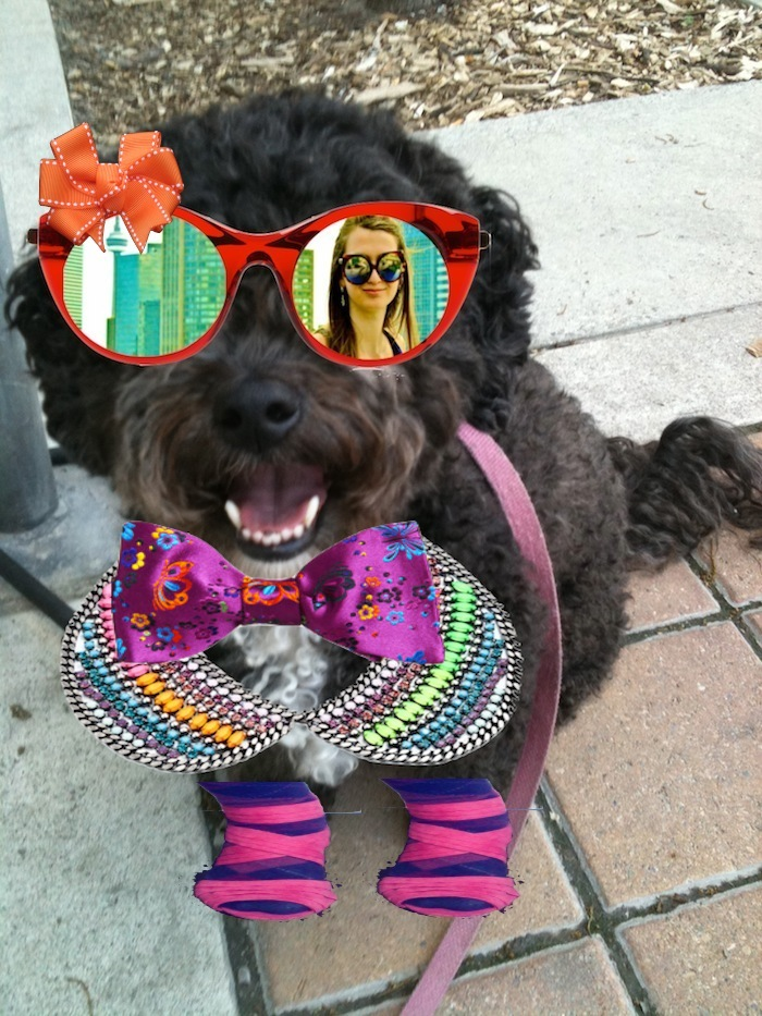 Meet Pebbles, my loyal 5 year old pooch, Trend Nerd's new editor. Although I believe a real dog doesn't wear clothes, Pebbles insisted on rocking her breathtaking bows and baubles! xo!